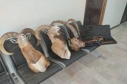 شکارچیان متخلف در کرمان دستگیر شدند