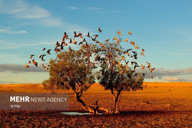 عکس های منتخب از طبیعت استرالیا