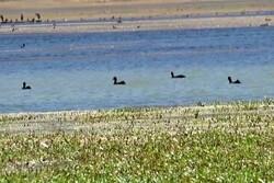 """""""Choghakhor"""" göleti göçmen kuşlara ev sahipliği yapıyor"""