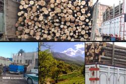 قاچاق چوب تهدید جدی برای باغات تویسرکان/ درختان چوب حراج خوردند