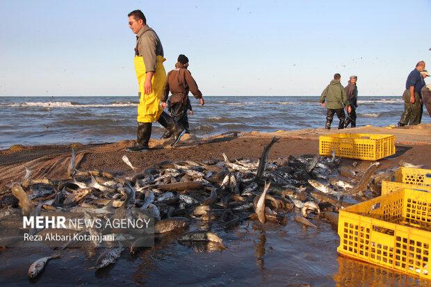Hazar Denizi'nde balık sezonu başladı