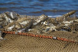 آیین نامه ماهیگیری مسئولانه در خوزستان پیگیری میشود