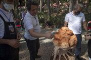 برگزاری روز جهانی چوب در کرمانشاه