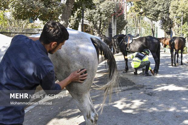 یگان اسب سوار در حال آماده سازی برای شروع رژه هستند .