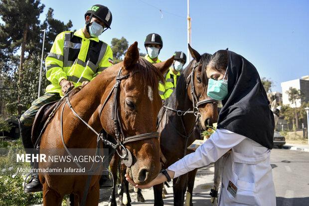 یکی از کادردرمان درحال غذا دادن به اسب یگان ویژه است .