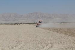 اولین کشت آبی گندم در بخش اشکنان آغاز شد