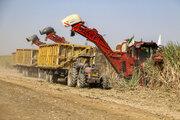 Harvesting sugarcane begins in Khuzestan