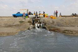 سطح پرورش میگوی استان بوشهر به ۱۰ هزار هکتار میرسد