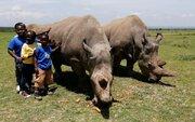 الواقع الرماديّ لآخر وحيد قرن أبيض شمالي في العالم/