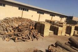 بیش از ۱۵ هزار مترمکعب چوب قاچاق در آذربایجان غربی کشف شد