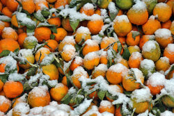 First snowfall this year in Ardabil