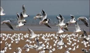 زمستان رؤیایی در تالابهای شمال/ ایستگاهی برای پرندگان مهاجر