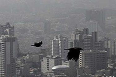 کیفیت هوای پایتخت برای گروه های حساس ناسالم است
