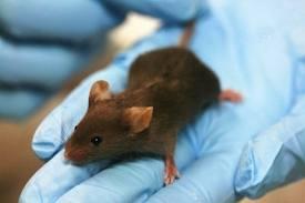 موشهای زنده خوار در پایتخت/ نبرد تک تیراندازها