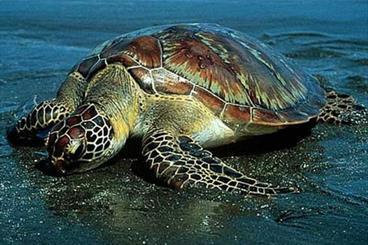 تراژدی غمبار مرگ جانوران در سواحل هرمزگان/ وضعیت اورژانسی مرگ دلفین ها