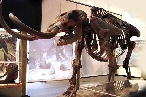 کشف فسیل 9 میلیون ساله ماموت و کرگدن در مراغه