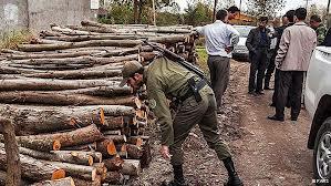 خطای قانونگذاری را ه را برای قاچاقچیان چوب باز کرد