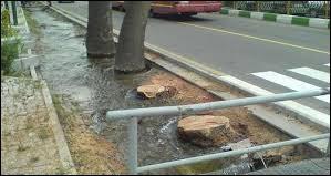 درختان خیابان ولیعصر بدون استعلام از سازمان میراث فرهنگی قطع شدند