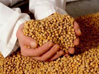 توسعه روابط بین الملل صنعت خوراک دام در سال ۹۵