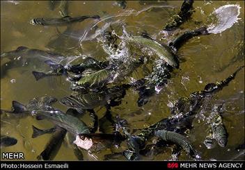 پرورش ماهی