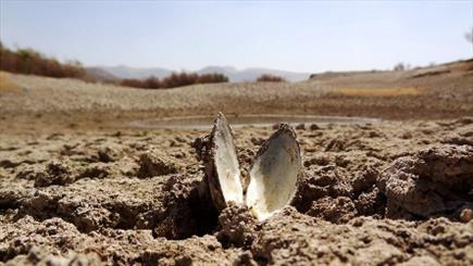 """مرگ مادر سیمره و کارون/ فاجعه زیست محیطی """"گاماسیاب"""" و آبزیانی که خوراک مور بیابان شدند"""