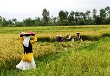فرصت های سرمایه گذاری کشاورزی گیلان  گامی موثر در ایجاد اشتغال پایدار/ لزوم ایجاد سد در مقابل سیل ویرانگر تغییر کاربری اراضی