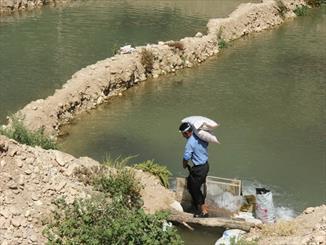 وضعیت بحرانی محیط زیست در رودخانه کارون/ مزارع غیر مجاز پرورش ماهی در سرشاخه ها