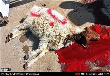 بازرسان دامپزشکی استان مرکزی بر ذبح قربانی در ایام سوگواری محرم نظارت می کنند