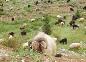 19 دامسر و خانه سرا در غرب مازندران تخریب شد
