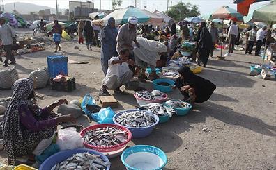 پنج شنبه بازار میناب در آستانه تعطیلی/ فروش و ذبح غیربهداشتی دام به معضل اجتماعی تبدیل شد