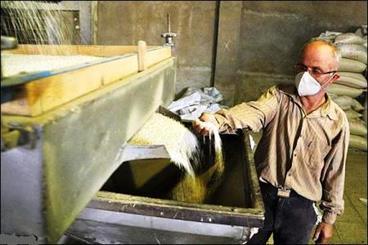سازمان اصناف برنج در شمال تشکیل شود/ وضعیت اسفبار شالیکوبی
