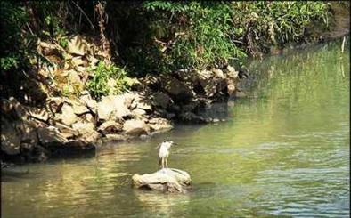 رودخانه های رشت قربانی بی توجهی و مسئولیت ناپذیری انسان ها/ لزوم  نجات زرجوب و گوهر رود  از چنگال فاضلاب