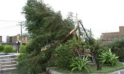 توفان سبب شکستگی ۱۰ درخت در جنوب تهران شد