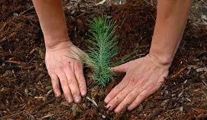 كاشت يك درخت به ازاي هر تولد در بام ايران/ سپردن مراقبت از درخت به كودك در سن شش سالگي