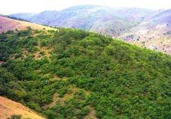 13 درصد جنگل های استان ایلام در معرض تخریب قرار دارند