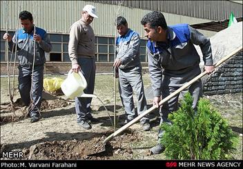 توازن در توزيع فضاي سبز و افزايش سرانه فضاي سبز زمستاني مد نظر شهرداری زنجان است