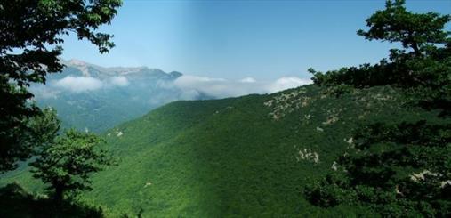 مطالعه احداث 200 هکتار جنگل دست کاشت در آذربایجان غربی/اجرای طرح ذخیره گاه جنگلی در 352 هکتار