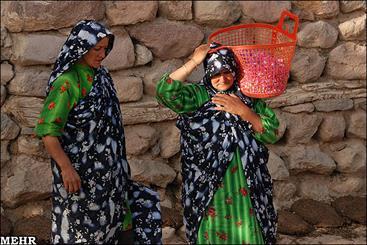 اشتغال، تحصیل و وضعیت نامناسب بهداشتی مهمترین مشکلات زنان روستایی