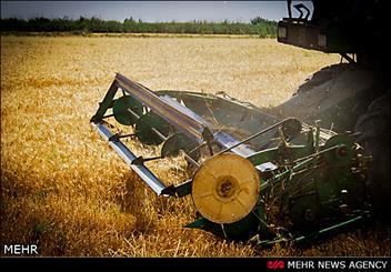 افزایش 35 درصدی سطح زیر کشت محصول گندم در شهرستان چرداول