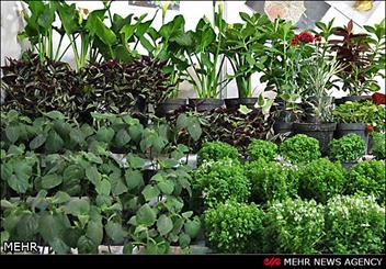نخستین کنگره ملی گلها و گیاهان زینتی در کرج برگزار می شود