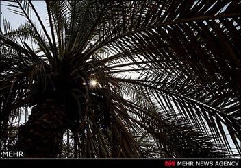 IMG09315484 کلید قفل اقتصاد تک محصولی شرق کرمان چرخید