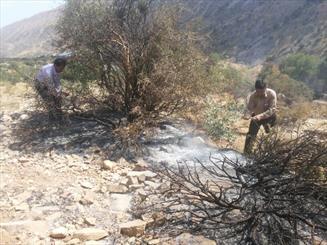 باغ فرزانه شیراز آتش گرفت