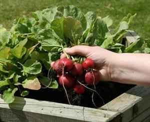 اختصاص ۱۰۰ واحد فروش سبزیجات سالم در شهر زنجان