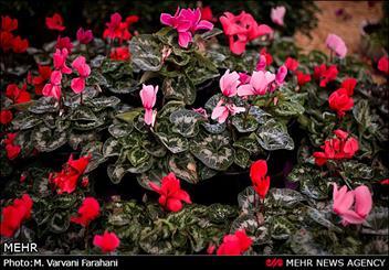 نمایشگاه گل و گیاه در قزوین گشایش یافت