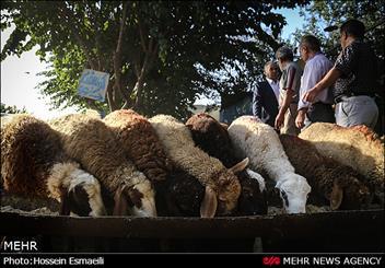 مراکز عرضه غیر مجاز دام در غرب تهران ساماندهی می شود