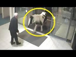 ورود اسب به ایستگاه پلیس در انگلستان!
