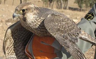 Arab illegal hunters continue trespassing into Iran