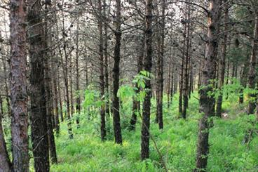 Deforestation in Iran disturbing: Official