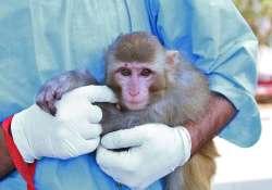 رفع ابهام از میمون خالدار فضایی/ مکان فرود کاوشگر زیستی