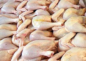 سالانه 10 هزار تن گوشت خالص سفید در سقز تولید می شود
